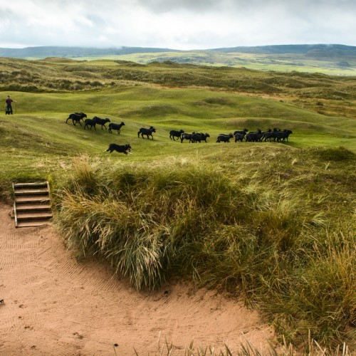 Machrihanish_Dunes_092